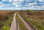 Landscape with an earth road near corn field