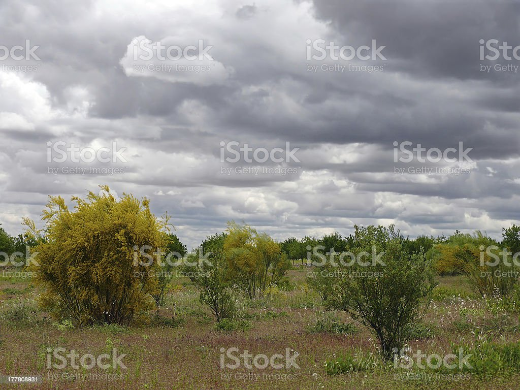 landscape with broom royalty-free stock photo