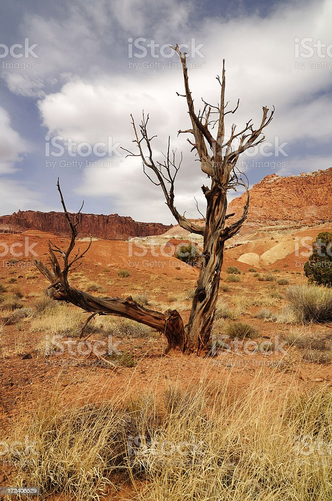Landscape with dry lone tree in Capitol Reef National Park royalty-free stock photo
