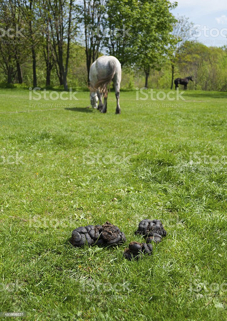 Landscape with dung, grass and horses stock photo
