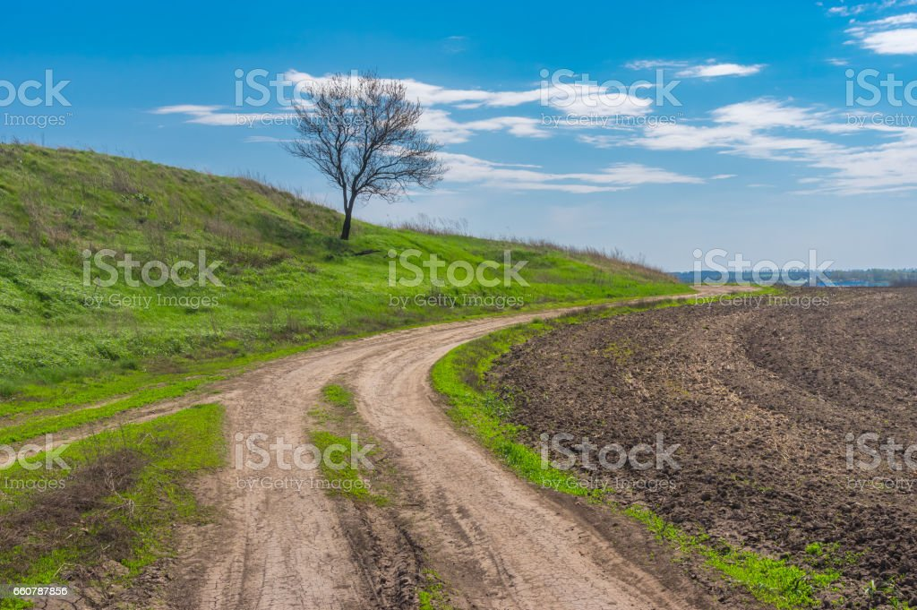 Landscape with earth road and lonely apricot tree at early spring season stock photo