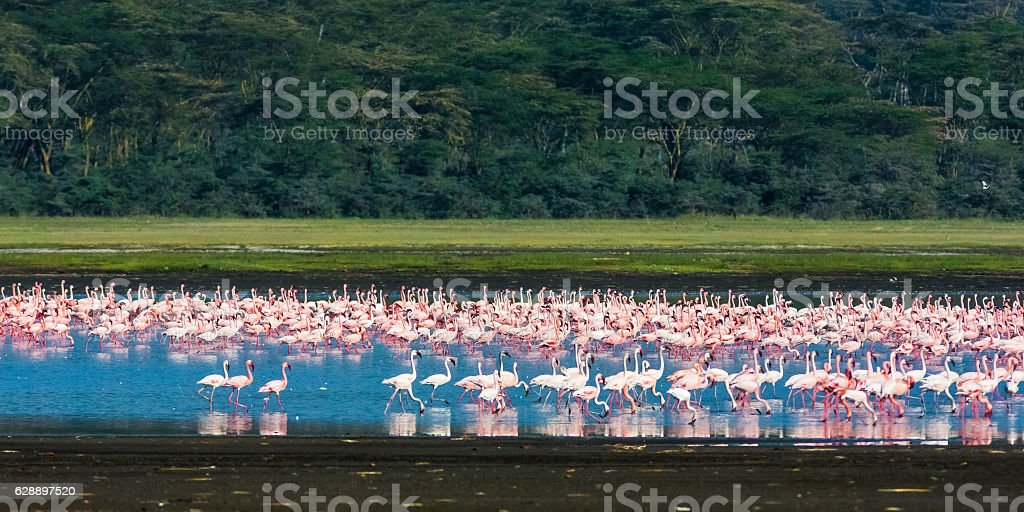 Landscape with flamingos. Pink birds. Nakuru, Kenya stock photo