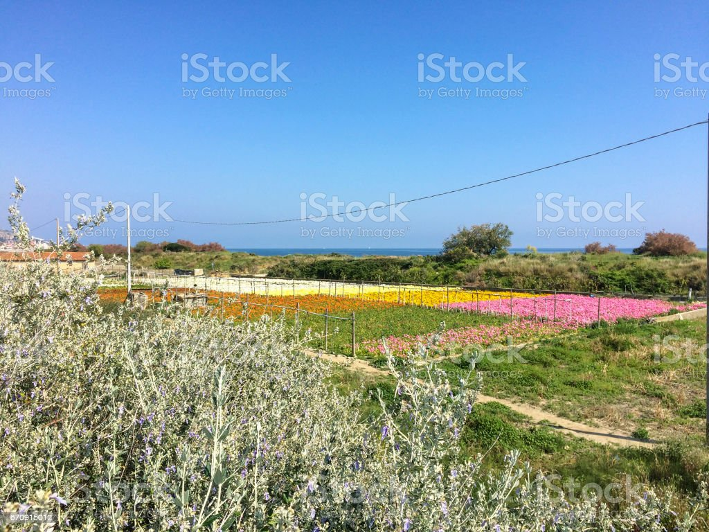 Landscape with flowers growing on the sea stock photo