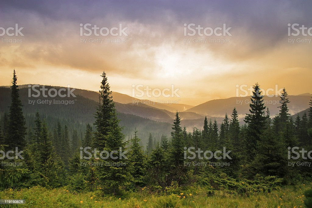 Landscape with fog stock photo
