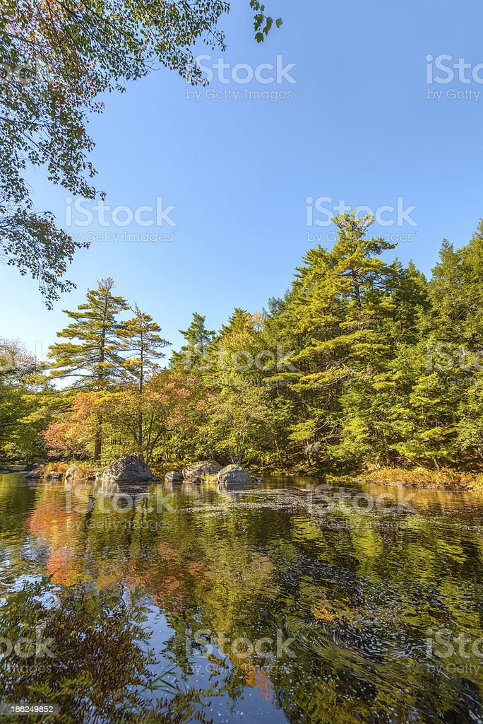 Landscape with forest river in autumn stock photo