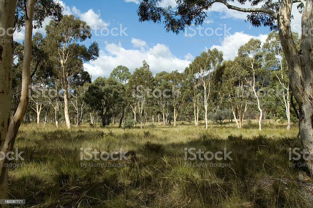 Landscape with grass and trees of the Australian countryside royalty-free stock photo