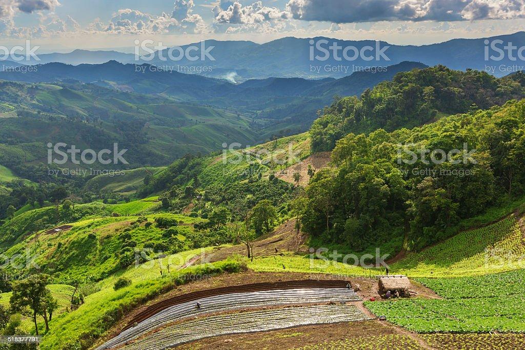 Landschaft mit grünen Mais-Feld, Wald und Berge Lizenzfreies stock-foto