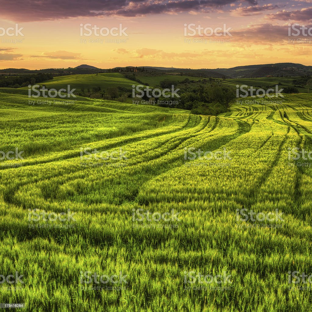 Landscape with Green Crop Fields at Sunrise in Tuscany royalty-free stock photo