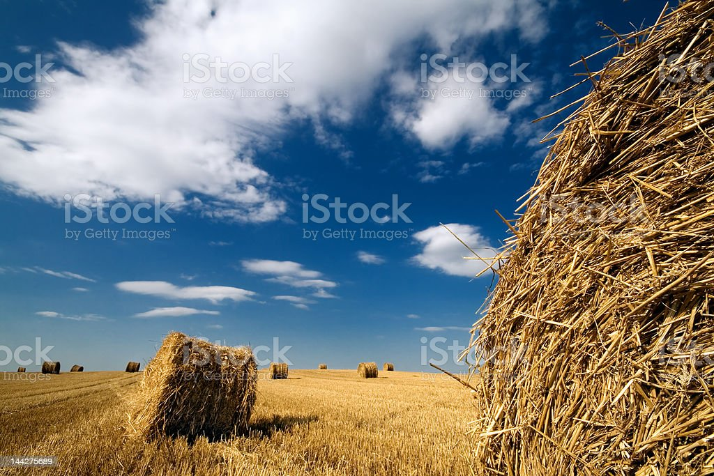 Landscape with haystacks and blue sky stock photo