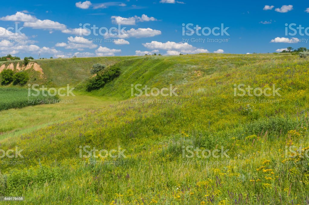 Landscape with hills overgrown with wild grasses stock photo