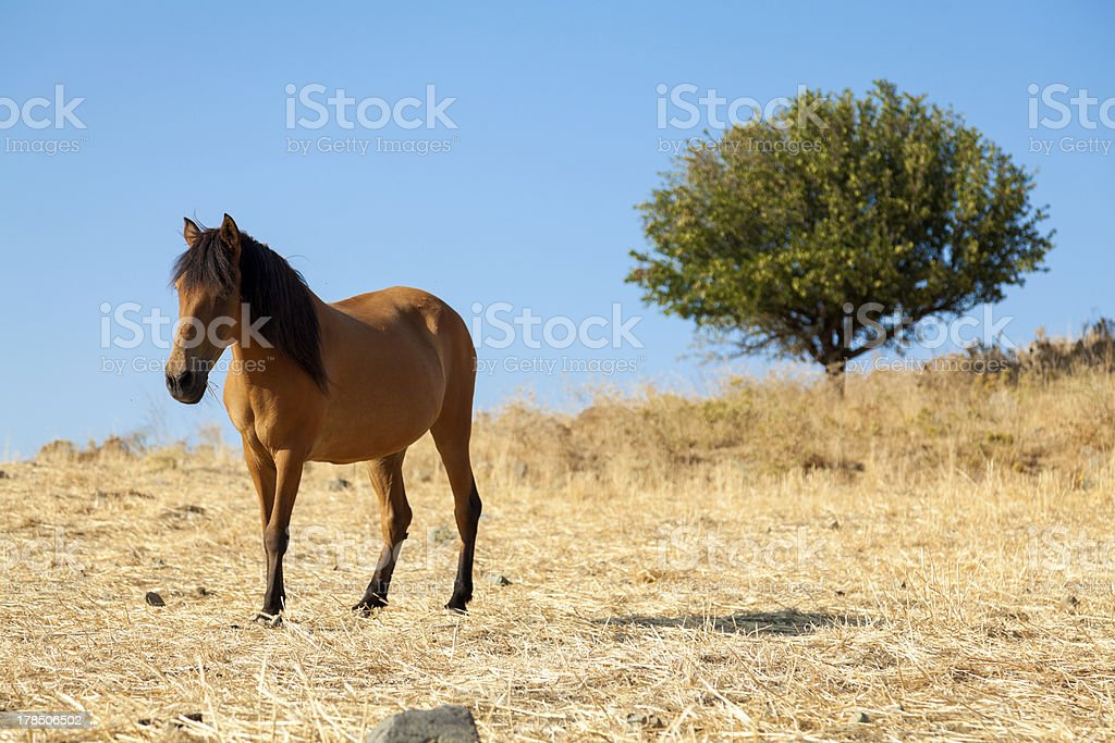 Landscape with horse royalty-free stock photo