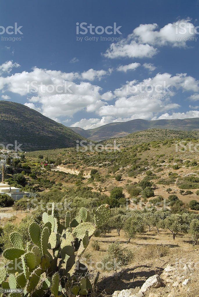 Landscape with Indian Fig royalty-free stock photo