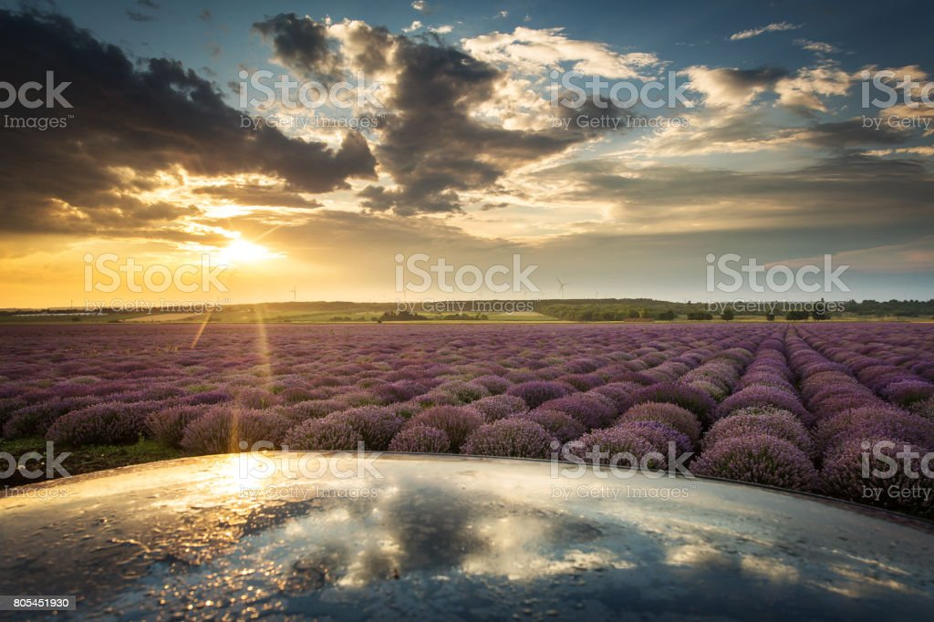 Landscape with lavander field on sunset with beautfiful clouds and electric wind stock photo