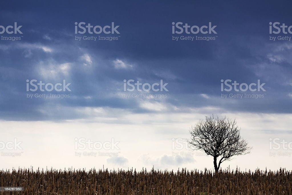 landscape with lonely tree royalty-free stock photo