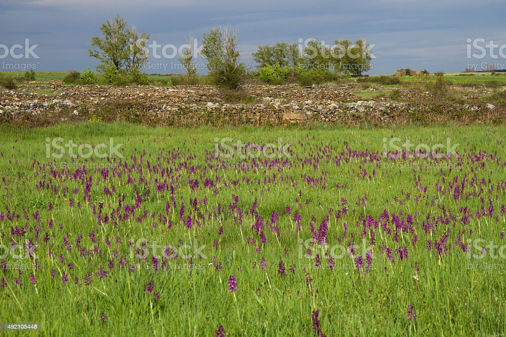 Landscape with Meadows and Orchids - Paisaje con Orquideas stock photo