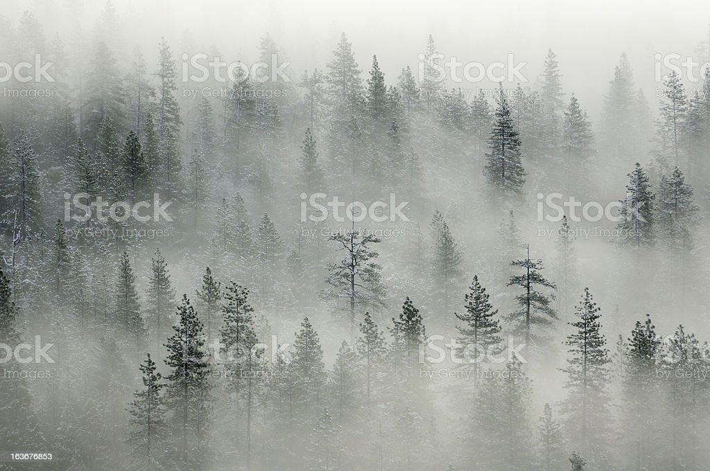 Landscape with misty forest in Yosemity Valley royalty-free stock photo