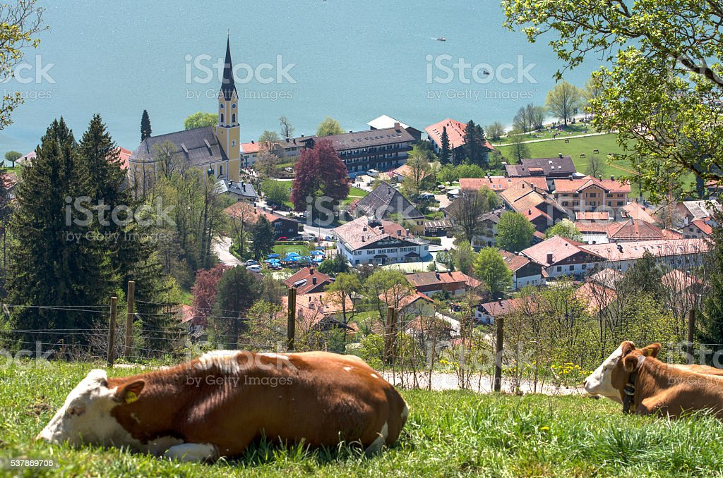 Landscape with mountain lake and cows. royalty-free stock photo