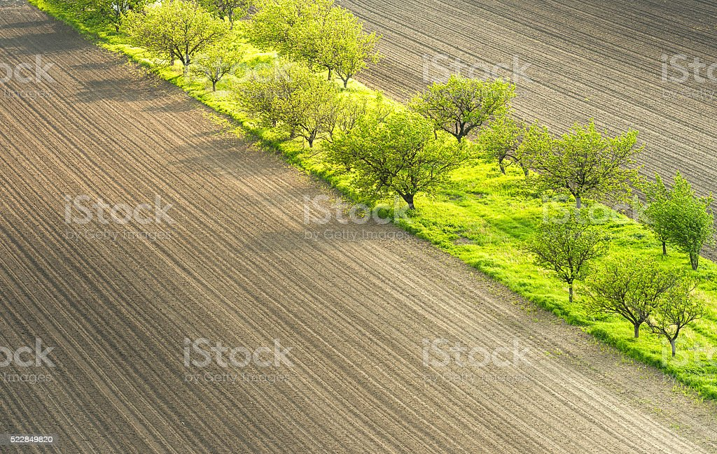 landscape with orchard stock photo