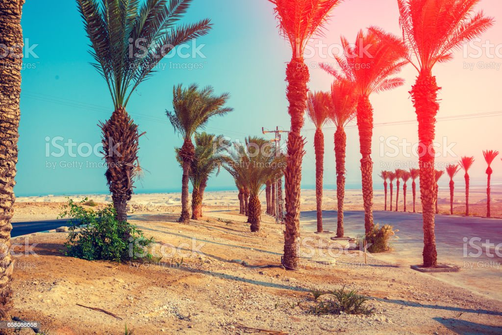 Landscape with palm trees in desert, Nature Israel stock photo