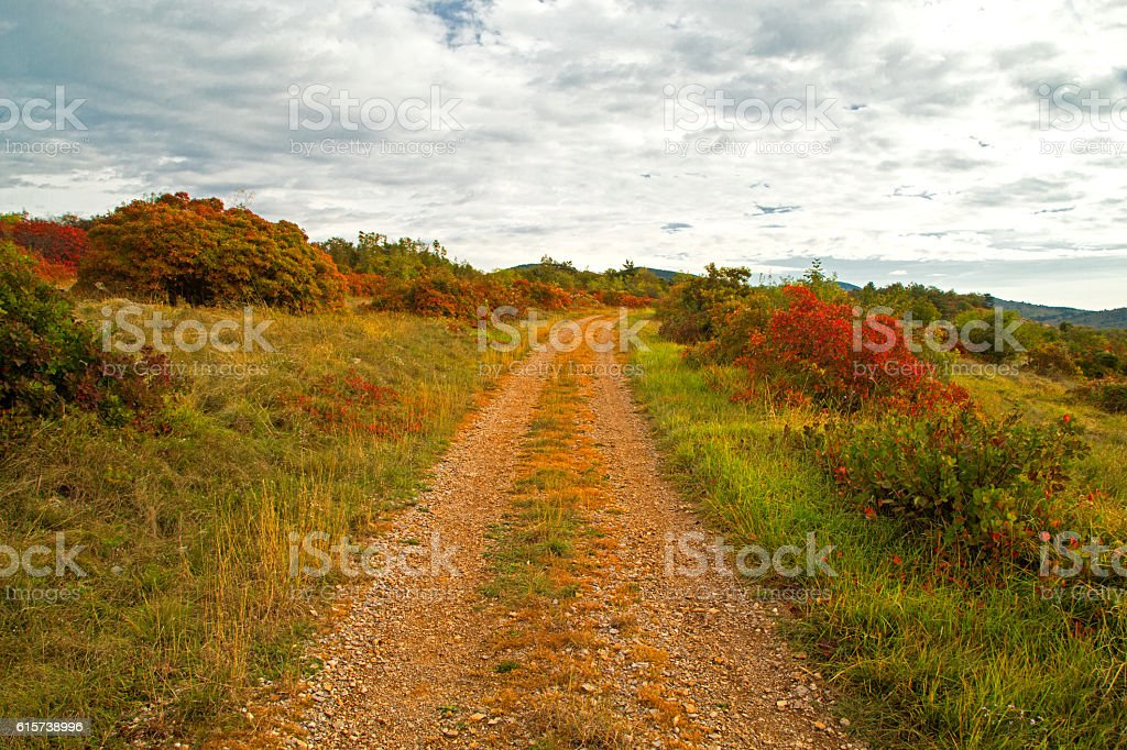 Landscape with pathway and red Karsian Smoketree stock photo