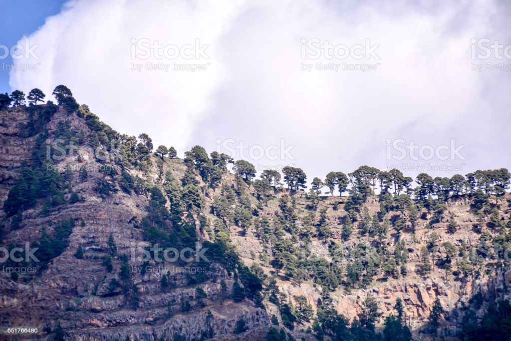 Landscape with pine forests and mountains stock photo