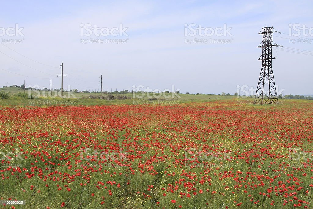Landscape with red Poppies royalty-free stock photo