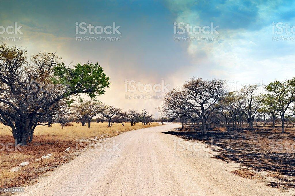 Landscape with road and fire evidence, Etosha National Park,Namibia stock photo