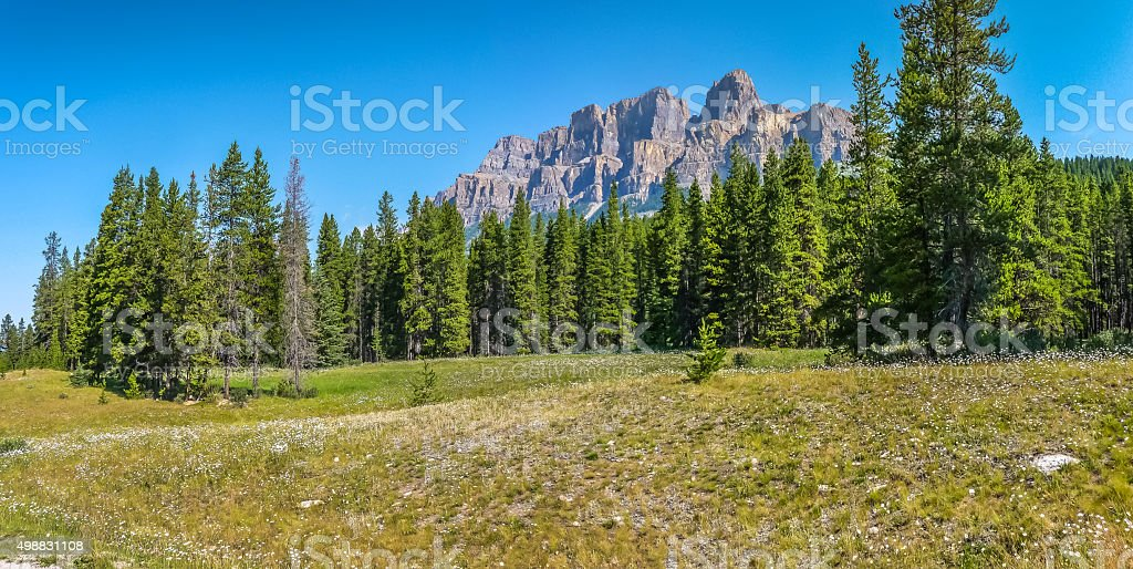 Landscape with Rocky Mountains and flowers, Alberta, Canada stock photo