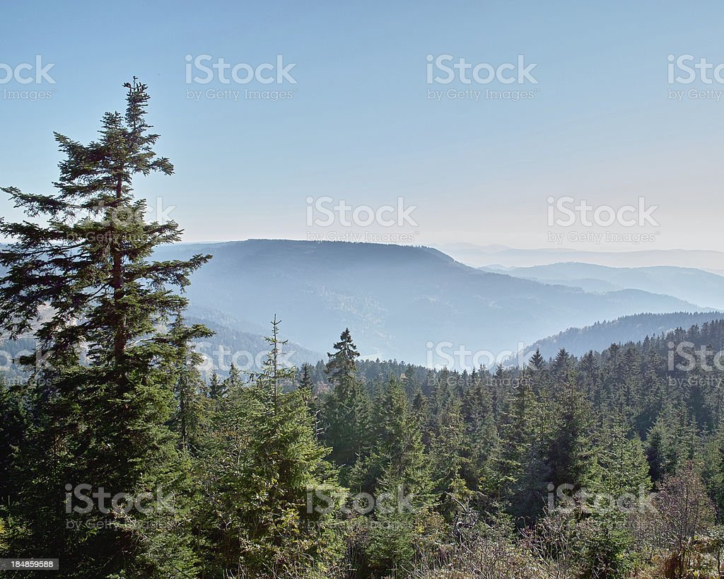 landscape with rolling hills and fir in Black Forest royalty-free stock photo