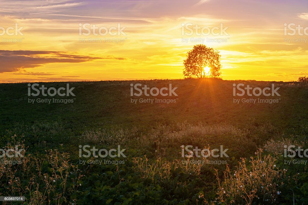 Landscape with single tree over sunset sky stock photo