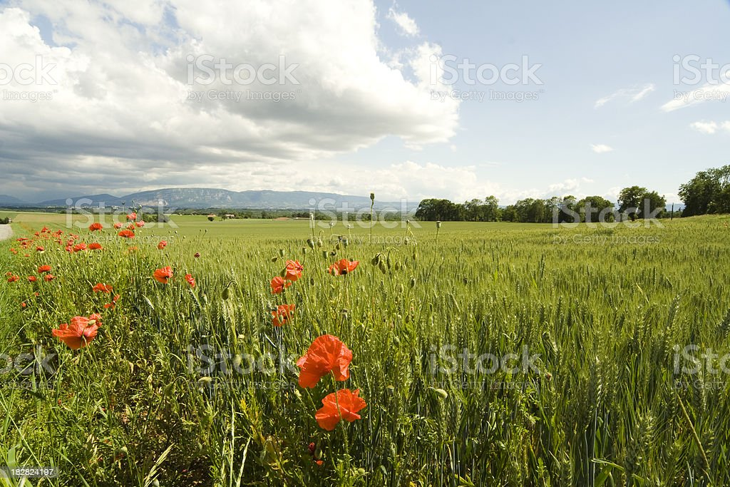 Landscape with Sky and Cultivated Field royalty-free stock photo