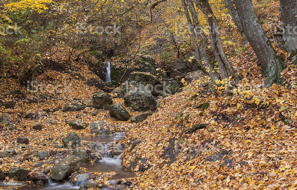 Landscape with small stream in autumnal forest stock photo