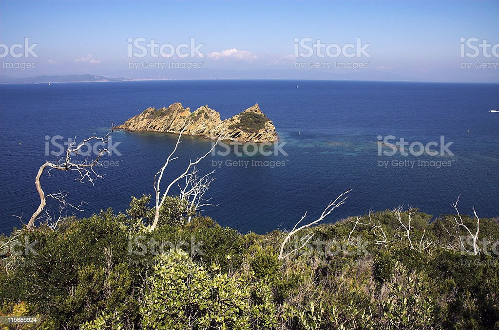 Landscape with snags royalty-free stock photo