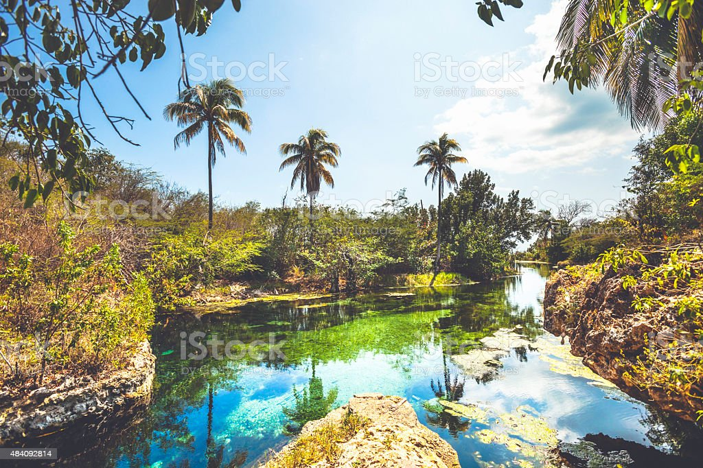 Landscape with springs and palm trees, Jamaica. stock photo