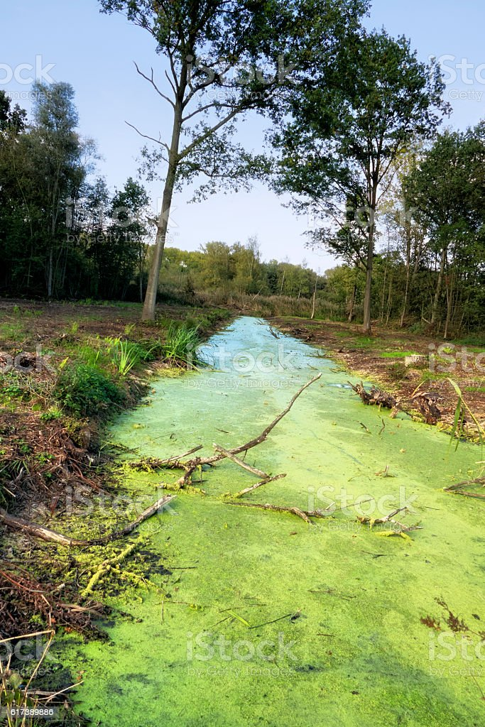 Landscape with  standing water overgrown with duckweed stock photo