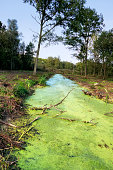 Landscape with  standing water overgrown with duckweed
