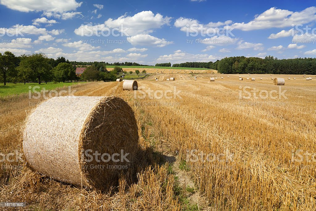 Landscape with straw bales royalty-free stock photo
