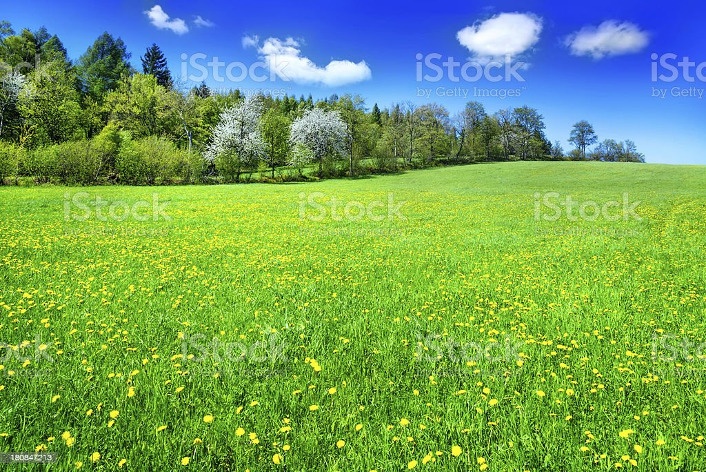 Landscape with summer cloudscape royalty-free stock photo