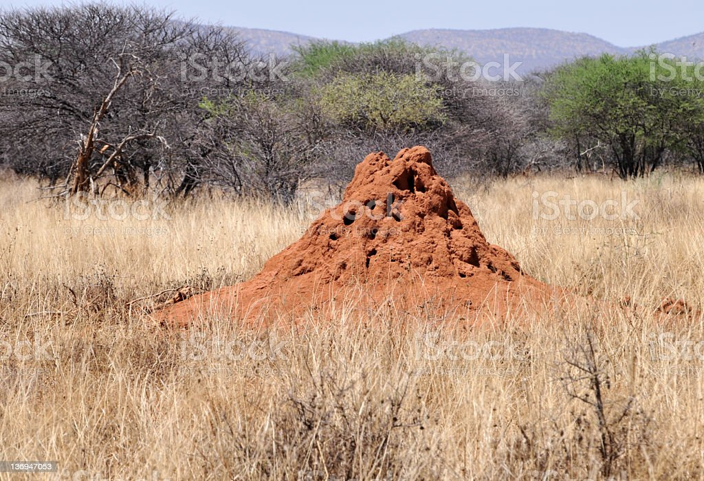 Landscape with termite mound. stock photo