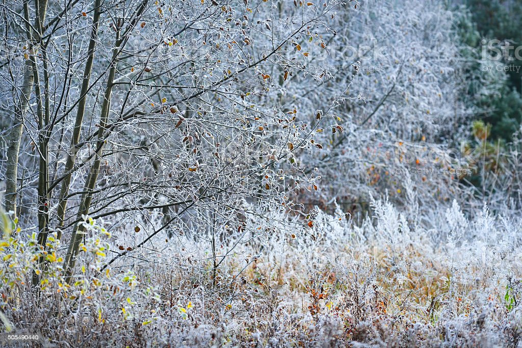 Landscape with the frozen plants and the hoar-frost stock photo