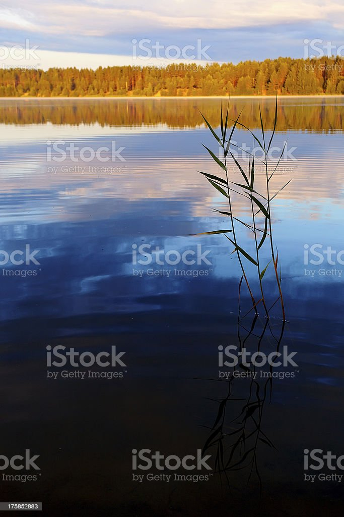Landscape with the lake. royalty-free stock photo