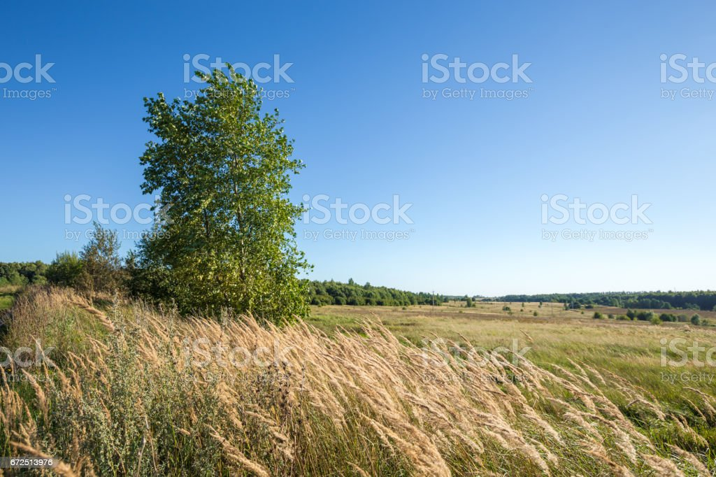 Landscape with the Russian expanses stock photo