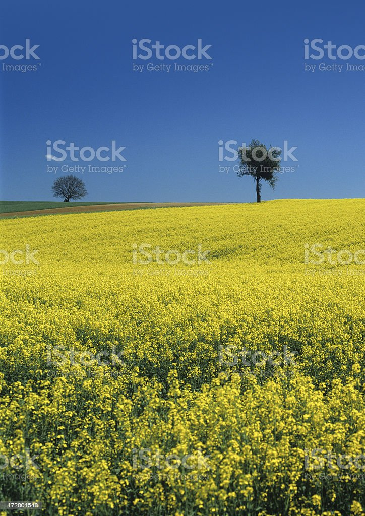Landscape with tree and grape  (image size XXL) royalty-free stock photo