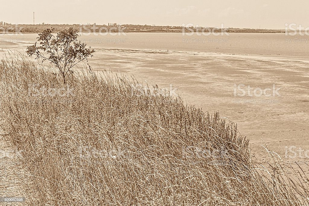Landscape with tree and herbs on the bay, sepia stock photo