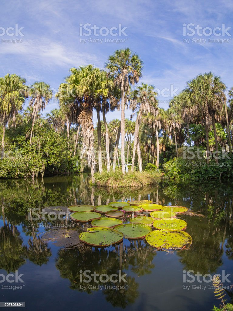 Landscape with trees and lake stock photo