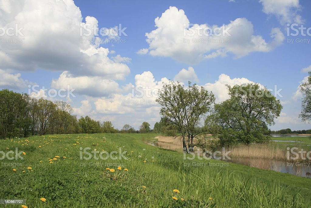Landscape with Trees stock photo