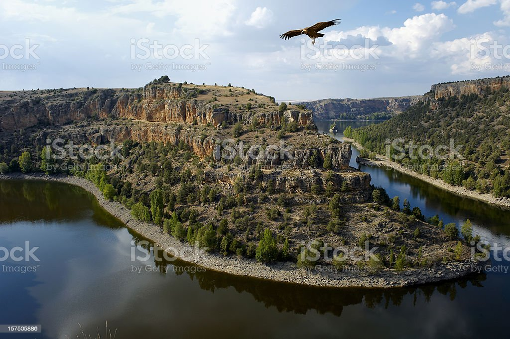 Landscape with vulture. stock photo