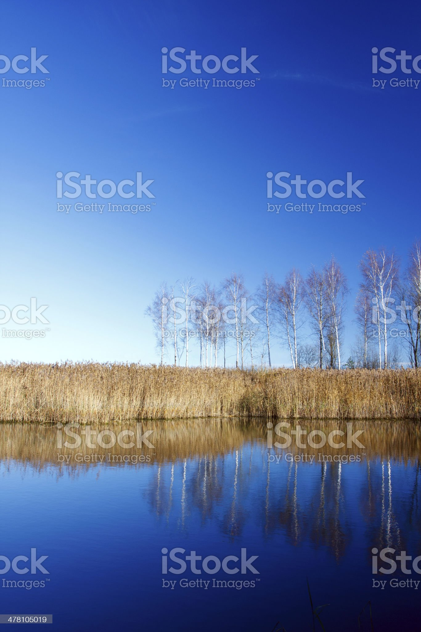 Landscape with water and birches in Autumn royalty-free stock photo