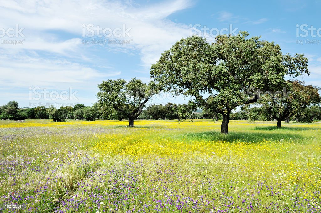 Landscape with wildflowers and cork trees in spring,Alentejo,Portugal stock photo