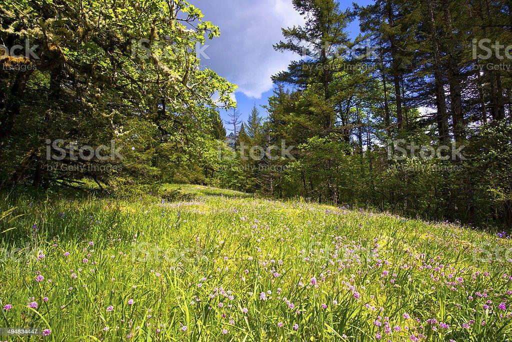 Paesaggio con campi di fiori selvatici sulla radura e muschio su alberi foto stock royalty-free